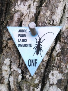 arbre_bio-diversite