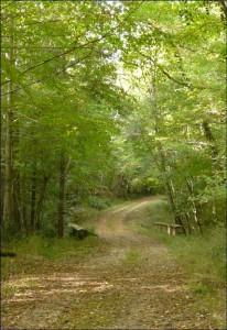 Forêt de la Grésigne : Sentier de la Baronne
